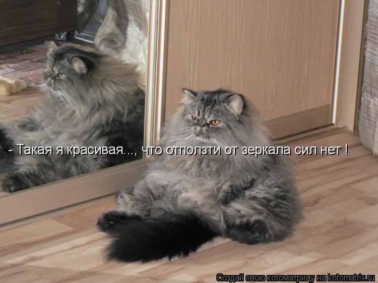 Котоматрица: - Такая я красивая..., что отползти от зеркала сил нет !