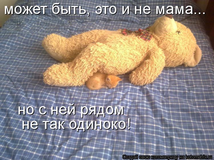Котоматрица: может быть, это и не мама... но с ней рядом не так одиноко!
