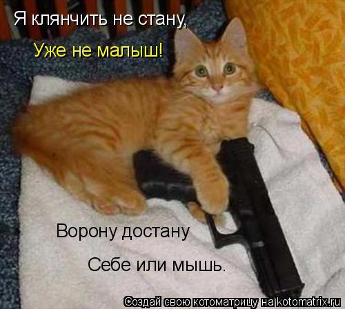 Котоматрица: Я клянчить не стану, Уже не малыш! Ворону достану Себе или мышь.