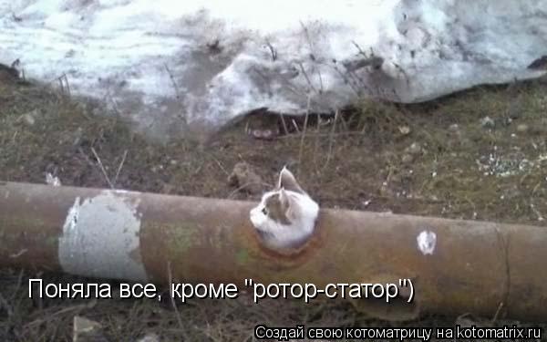 "Котоматрица: Поняла все, кроме ""ротор-статор"")"