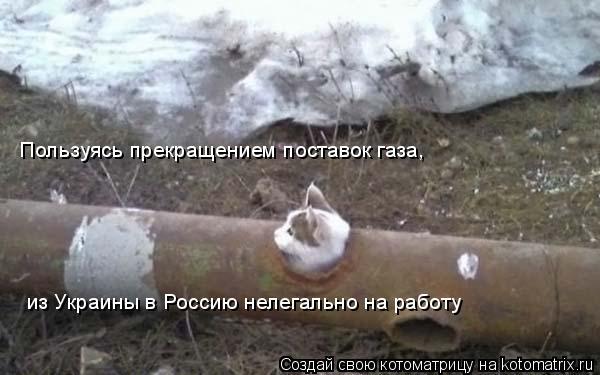 Котоматрица: Пользуясь прекращением поставок газа, из Украины в Россию нелегально на работу