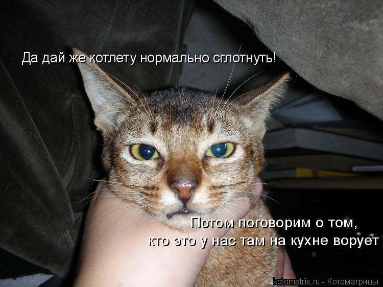 Котоматрица: Да дай же котлету нормально сглотнуть! Потом поговорим о том, кто это у нас там на кухне ворует