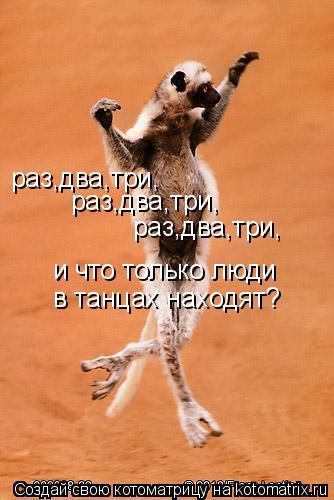 Котоматрица: раз,два,три, раз,два,три, раз,два,три, и что только люди в танцах находят?