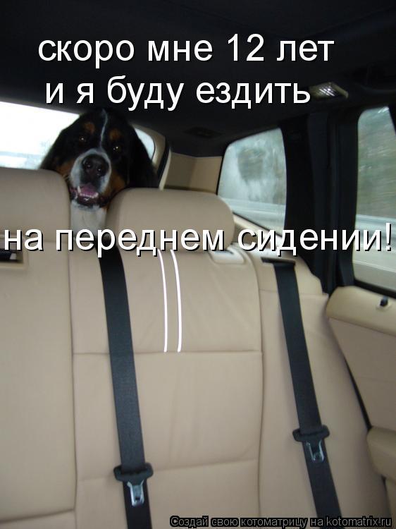 Котоматрица: скоро мне 12 лет и я буду ездить на переднем сидении!!!