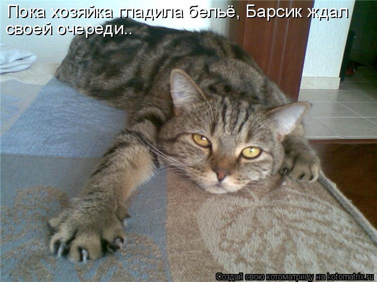 Котоматрица - Пока хозяйка гладила бельё, Барсик ждал своей очереди..