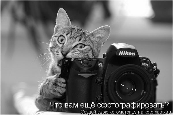 Что вам ещё сфотографировать?
