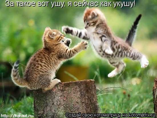 http://kotomatrix.ru/images/lolz/2011/03/10/847961.jpg