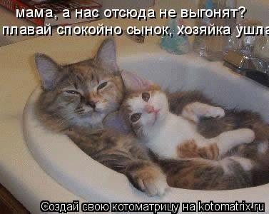 Котоматрица: мама, а нас отсюда не выгонят? плавай спокойно сынок, хозяйка ушла...