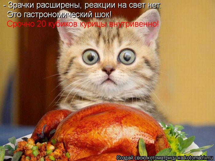 Котоматрица: - Зрачки расширены, реакции на свет нет. Это гастрономический шок! Срочно 20 кубиков курицы внутривенно!