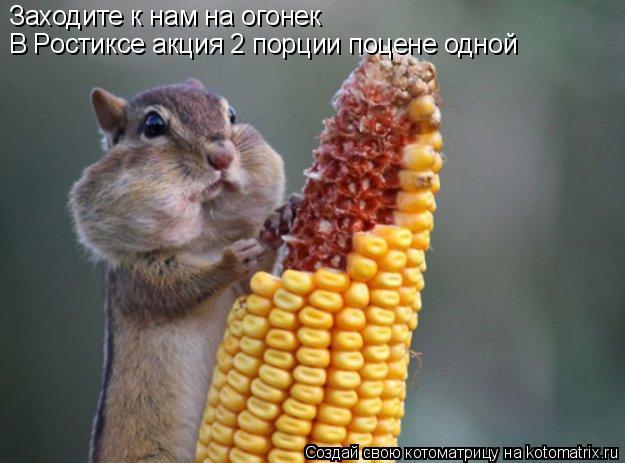 Котоматрица: Заходите к нам на огонек В Ростиксе акция 2 порции поцене одной