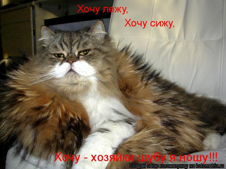 Котоматрица: Хочу лежу, Хочу сижу, Хочу - хозяйки шубу я ношу!!!
