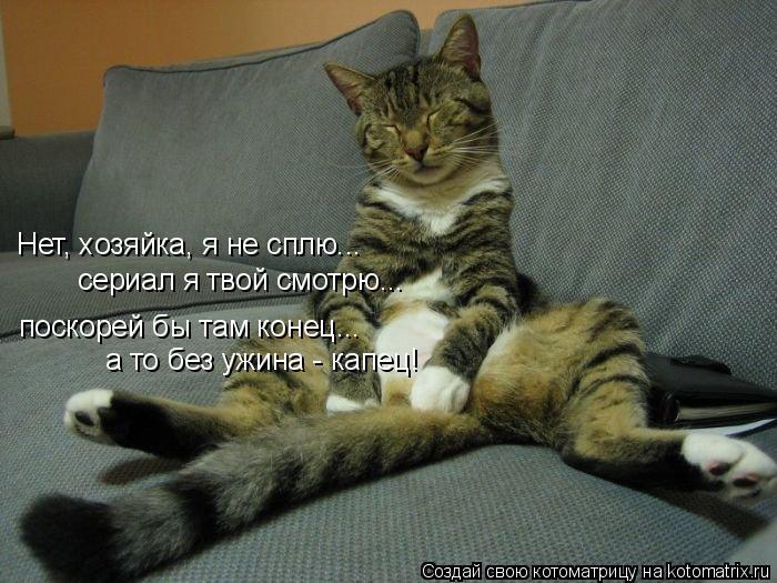 Котоматрица - Нет, хозяйка, я не сплю... сериал я твой смотрю... поскорей бы там кон