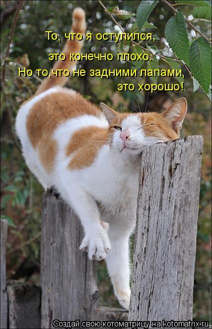 Котоматрица: Но то,что не задними лапами,  это хорошо! То, что я оступился,  это конечно плохо.