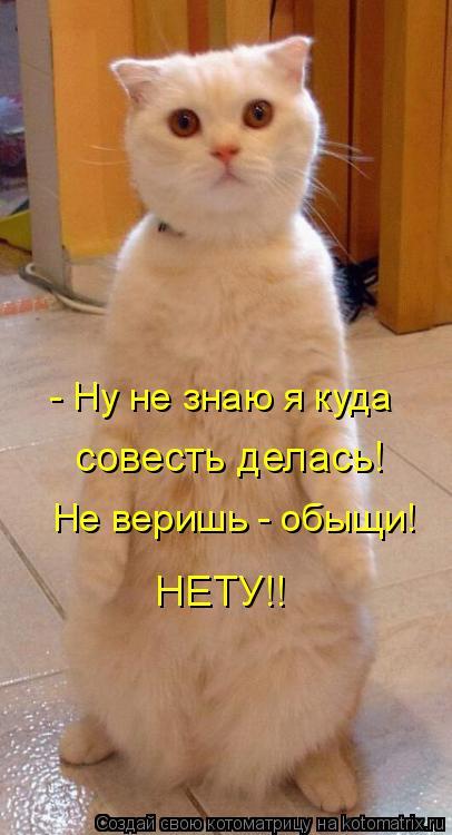 Котоматриця!)))) - Страница 4 848761