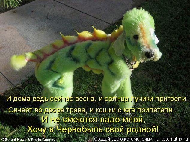 Котоматрица: И дома ведь сейчас весна, и солнца лучики пригрели Синеет во дворе трава, и кошки с юга прилетели... И не смеются надо мной,  Хочу в Чернобыль с