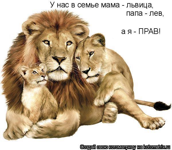 Котоматрица: У нас в семье мама - львица, папа - лев, а я - ПРАВ!