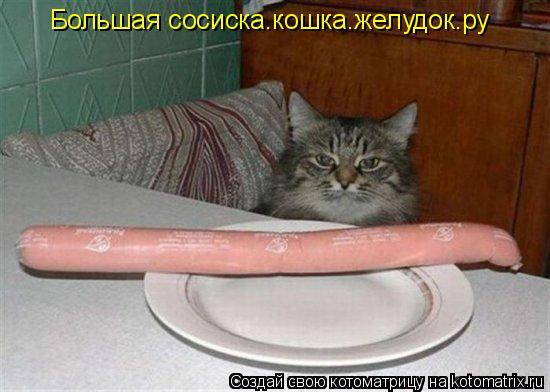 Котоматрица: Большая сосиска.кошка.желудок.ру