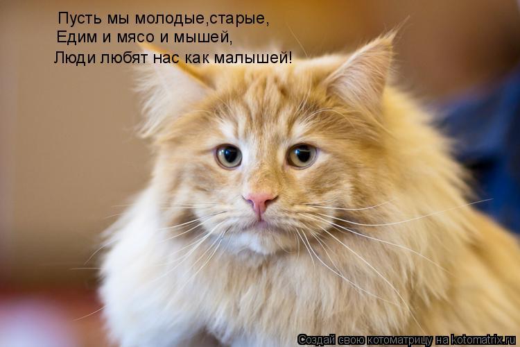 Котоматрица: Пусть мы молодые,старые, Едим и мясо и мышей, Люди любят нас как малышей!