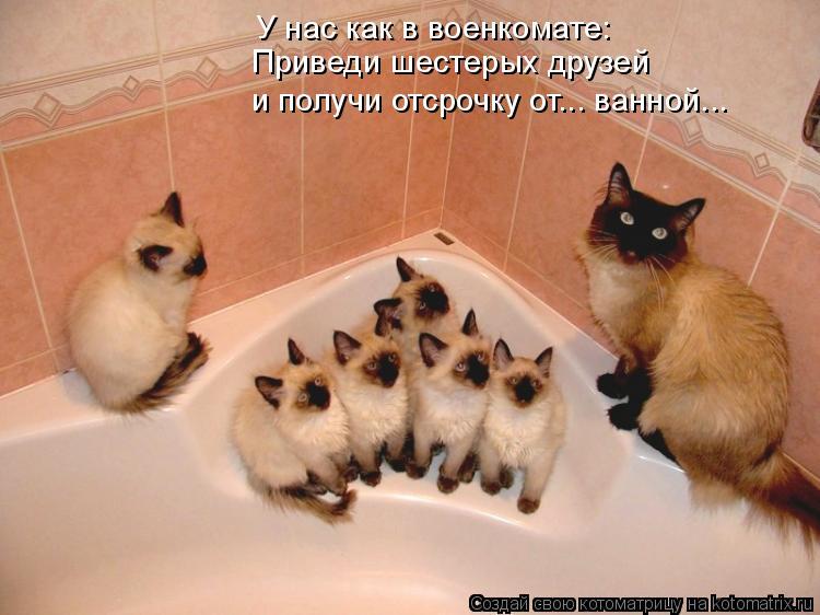 Котоматрица: У нас как в военкомате: Приведи шестерых друзей и получи отсрочку от... ванной...