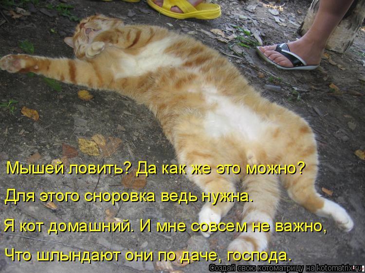 Котоматрица: Мышей ловить? Да как же это можно? Для этого сноровка ведь нужна. Я кот домашний. И мне совсем не важно, Что шлындают они по даче, господа.