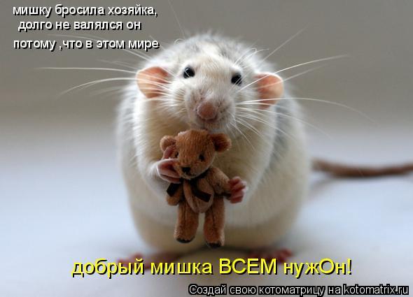 Котоматрица: мишку бросила хозяйка, долго не валялся он потому ,что в этом мире добрый мишка ВСЕМ нужОн!