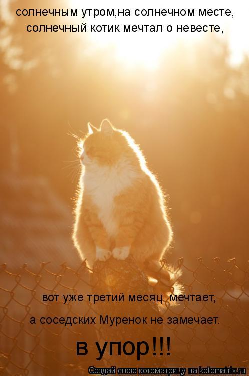 Котоматрица: солнечным утром,на солнечном месте, солнечный котик мечтал о невесте, а соседских Муренок не замечает. в упор!!! вот уже третий месяц  мечтае
