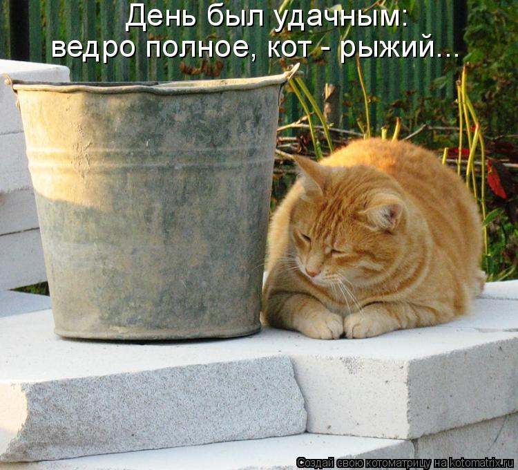 Котоматрица: День был удачным: ведро полное, кот - рыжий...