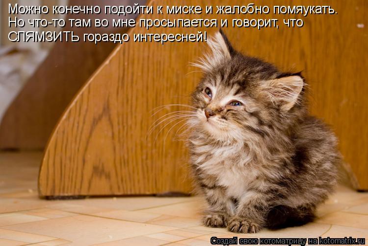 Котоматрица: Можно конечно подойти к миске и жалобно помяукать. Но что-то там во мне просыпается и говорит, что СЛЯМЗИТЬ гораздо интересней!