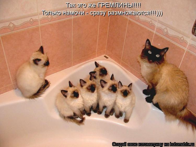 Котоматрица: Так это же ГРЕМЛИНЫ!!!!  Только намочи - сразу размножаются!!!)))