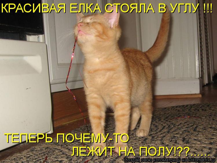Котоматрица: ТЕПЕРЬ ПОЧЕМУ-ТО  ЛЕЖИТ НА ПОЛУ!??...... КРАСИВАЯ ЕЛКА СТОЯЛА В УГЛУ !!!