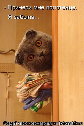 Котоматрица: - Принеси мне полотенце. Я забыла...