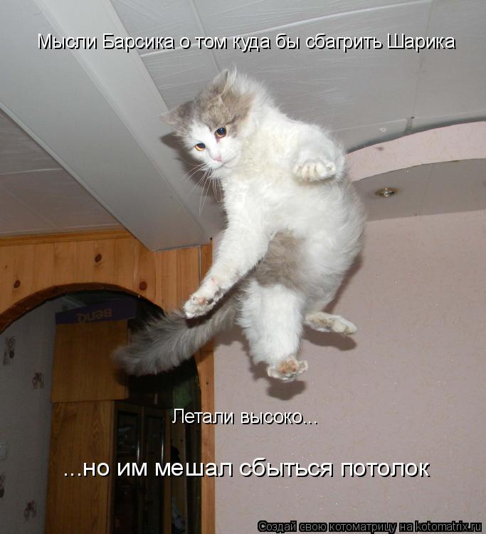 Котоматрица: Летали высоко... Мысли Барсика о том куда бы сбагрить Шарика ...но им мешал сбыться потолок