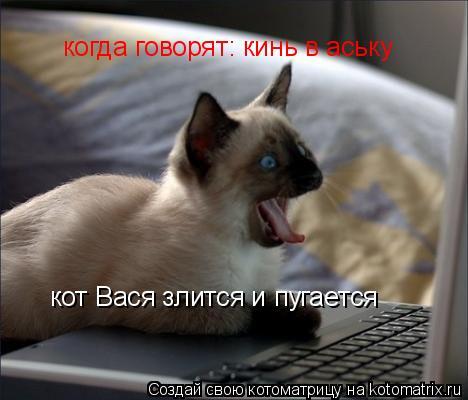 Котоматрица: когда говорят: кинь в аську  кот Вася злится и пугается