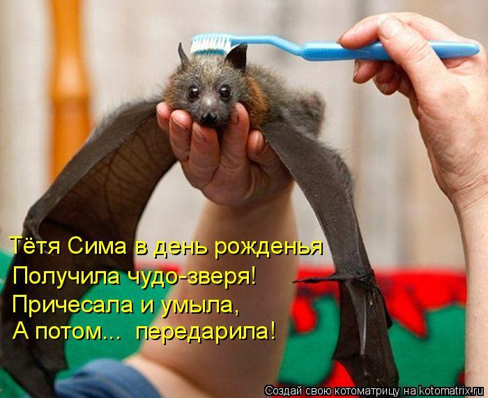 Котоматрица: Тётя Сима в день рожденья Получила чудо-зверя! Причесала и умыла, А потом...  передарила!