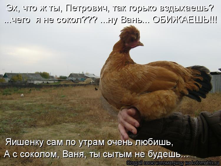 Котоматрица: Эх, что ж ты, Петрович, так горько вздыхаешь? ...чего  я не сокол??? ...ну Вань... ОБИЖАЕШЬ!!! Яишенку сам по утрам очень любишь, А с соколом, Ваня, т