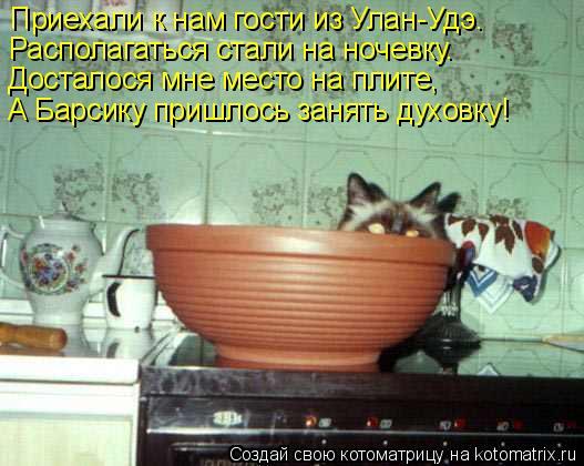 Котоматрица: Приехали к нам гости из Улан-Удэ. Располагаться стали на ночевку. Досталося мне место на плите, А Барсику пришлось занять духовку!