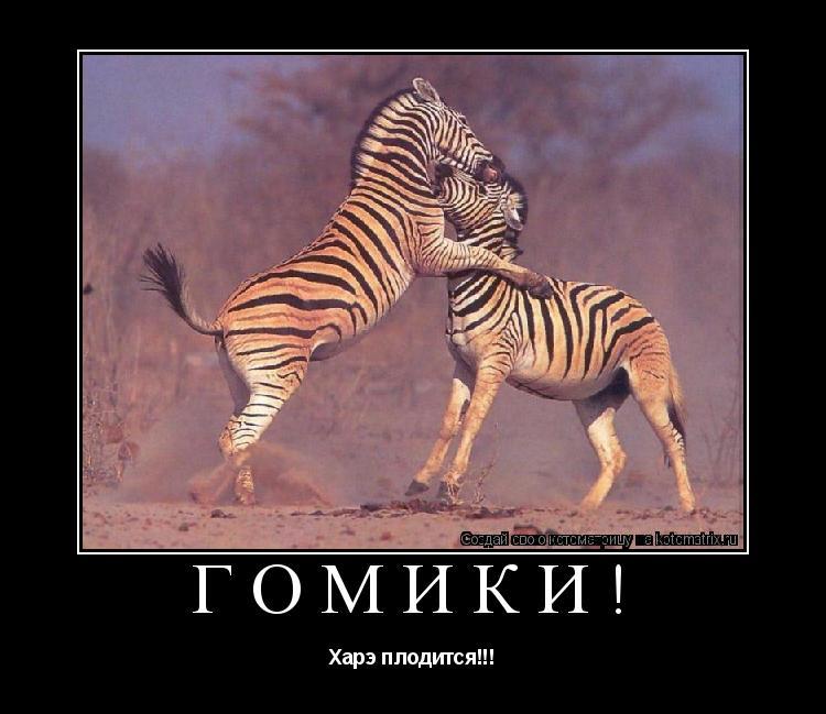 Смотреть фото гомики 26 фотография