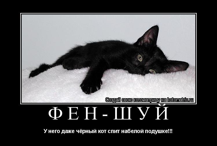 Котоматрица: Фен-шуй У него даже чёрный кот спит набелой подушке!!!