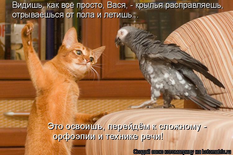 Котоматрица: Видишь, как всё просто, Вася, - крылья расправляешь, отрываешься от пола и летишь...  Это освоишь, перейдём к сложному -  орфоэпии и технике реч