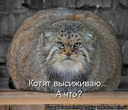 Котоматрица - А что? Котят высиживаю...