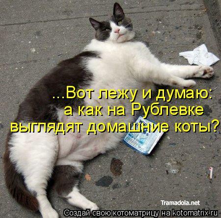 Котоматрица: ...Вот лежу и думаю: а как на Рублевке выглядят домашние коты?