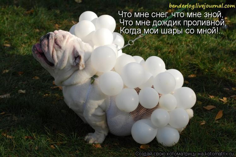 Котоматрица: Что мне снег, что мне зной, Что мне дождик проливной, Когда мои шары со мной!..