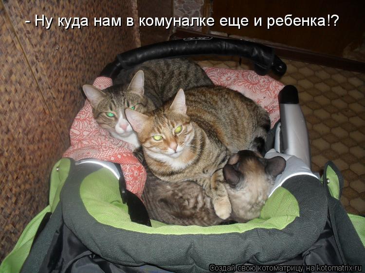 Котоматрица: - Ну куда нам в комуналке еще и ребенка!?