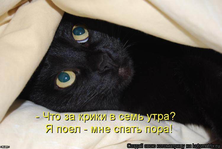 Котоматрица: - Что за крики в семь утра?  Я поел - мне спать пора!