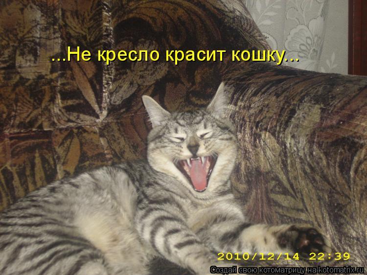 Котоматрица: ...Не кресло красит кошку...