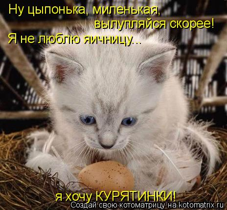 Котоматрица: Ну цыпонька, миленькая, вылупляйся скорее! Я не люблю яичницу... я хочу КУРЯТИНКИ!