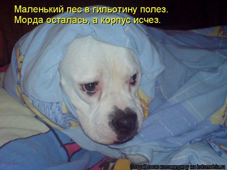 Котоматрица: Маленький пес в гильотину полез. Морда осталась, а корпус исчез.