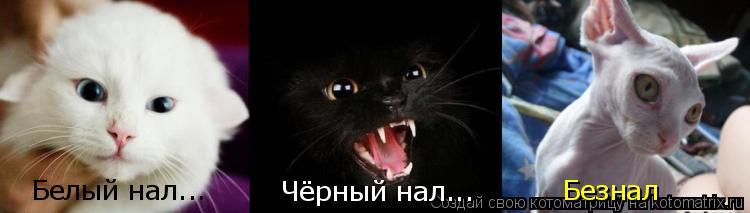 Котоматрица: Чёрный нал... Белый нал... Безнал