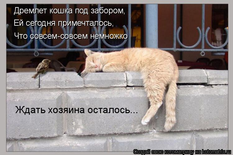 Котоматрица: Дремлет кошка под забором, Ей сегодня примечталось, Что совсем-совсем немножко Ждать хозяина осталось...