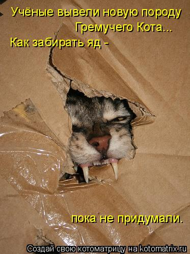 Котоматрица: Учёные вывели новую породу  Гремучего Кота... Как забирать яд -  пока не придумали.